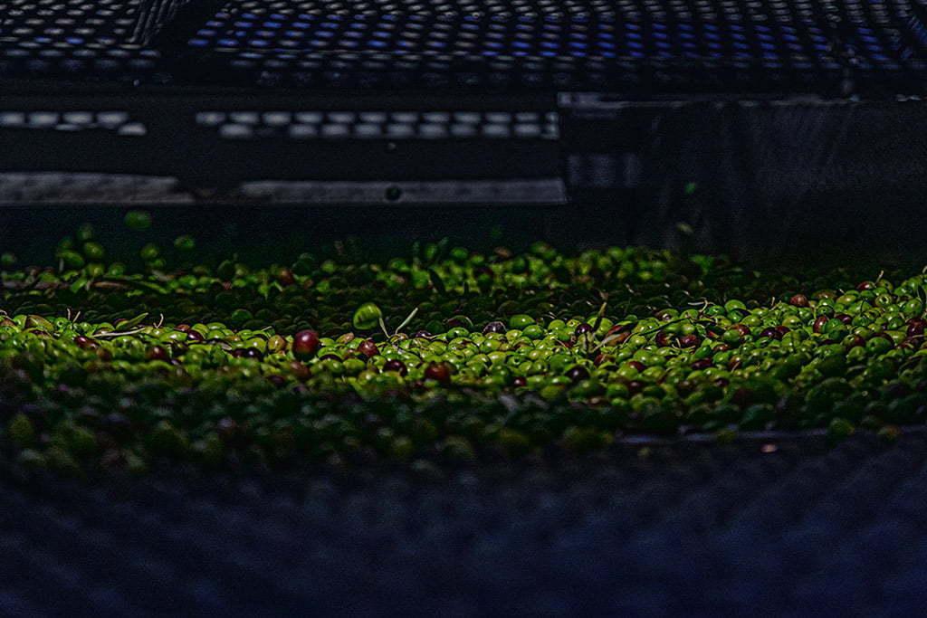 Fotografía corporativa para fábrica de aceite de oliva